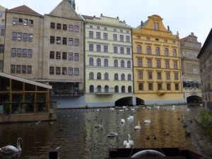 Swans and Riverside Buildings, Prague